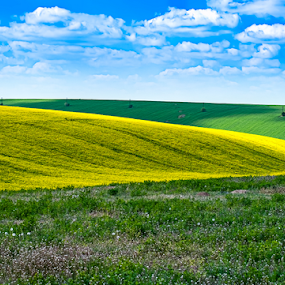 Spring colors by Opreanu Roberto Sorin - Landscapes Prairies, Meadows & Fields ( plant, bright, land, yellow, landscape, spring, crop, oil, farm, sky, nature, oilseed, gold, flower, rape, fields, clouds, canola, seed, green, agriculture, rural, environmental, field, rapeseed, environment, season, blue, scene, summer, cloud, energy,  )