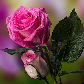 by Rakesh Syal - Flowers Flower Gardens