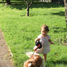Tiny Dog Walker by Kristine Nicholas - Novices Only Street & Candid ( cavalier, orange, spaniel, grass, green, infant, pup, white, cavalier king charles, kid, child, blennan, girl, pet, pets, puppy, cavalier king charles spaniel, baby, toddler, dog,  )