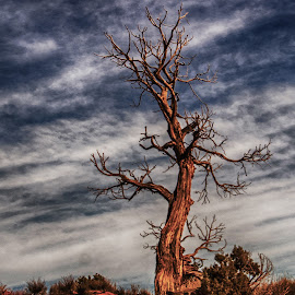 Tree and Sunrise by Richard Michael Lingo - Nature Up Close Trees & Bushes ( monument valley, nature, tree, utah, sunrise )