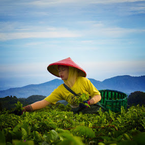 tea plantation worker by Budi Risjadi - Professional People Factory Workers