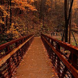 The Brilliant Bridge by Avishek Bhattacharya - City,  Street & Park  City Parks (  )