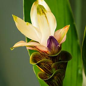 by Dee Haun - Flowers Single Flower ( yard, single flower, flowers, exotic, 170813x9494xce4on1 )