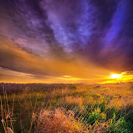 Where the Billows of Memory Quiver by Phil Koch - Landscapes Prairies, Meadows & Fields ( vertical, farmland, yellow, leaves, love, sky, fi  eld, tree, nature, weather, perspective, light, orange, twilight, art, agriculture, horizon, wis  consin, portrait, environment, dawn, season, serene, trees, lines, hope, inspirational, wisconsin, natural light, ray, joy, beauty, landscape, phil koch, spring, sun, photography, farm, life, horizons, inspired, clouds, office, park, beautiful, scenic, morning, shadows, red, blue, sunset, amber, peace, meadow, summer, beam, sunrise, earth, garden )