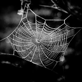 *** by Katka Kozáková - Black & White Macro ( black and white, spider web )