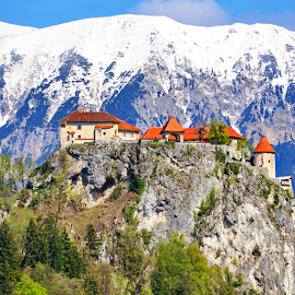 Bled Castle by Dotan Naveh - Buildings & Architecture Public & Historical ( plant, nobody, europe, famous place, mountain, tranquil scene, old ruin, architecture, landscape, spring, island, geology, sky, nature, snowy mountain peak, snow, idyllic, mountain peak, bled, travel destinations, lake bled, blue hour, nature backgrounds, bled castle, scenics, tourism, forest, lake, wide, beauty in nature, vacations, woods, architecture and buildings, tower, winter, sunset, medieval castle, outdoors, slovenia, castle, julian alps, medieval, panoramic, european alps )