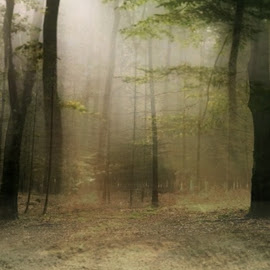 Winter by Sill Scaroni - Landscapes Forests (  )