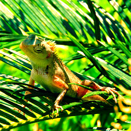Hmm by Nirabhra Mandal - Animals Reptiles