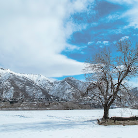 Mountains and lone tree by Kyley Hansen - Nature Up Close Trees & Bushes ( terrain, clouds, mountain, sky, winter, cold, snow )