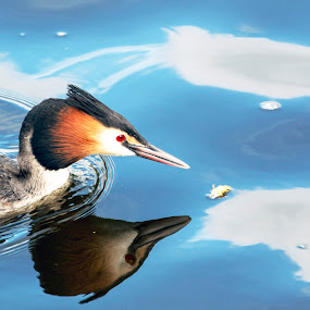 by Pedro Varão - Animals Birds (  )