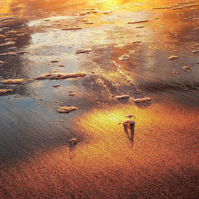 golden sand 01 by Vygintas Domanskis - Nature Up Close Sand ( sand, palanga, resort, lithuania, evening, golden hour )