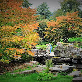 Gardens at Chatsworth by Ian Harvey-Brown - City,  Street & Park  City Parks