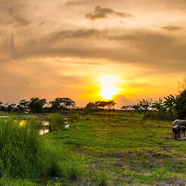 Sundown at the Farm by Ynon Francisco - Landscapes Prairies, Meadows & Fields ( grassland, farm, agriculture, meadow, philippines, tarlac, filed )