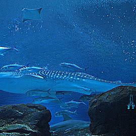 Sea Creatures by Christy Stanford - Animals Sea Creatures ( water, underwater, fish, sea, ocean )