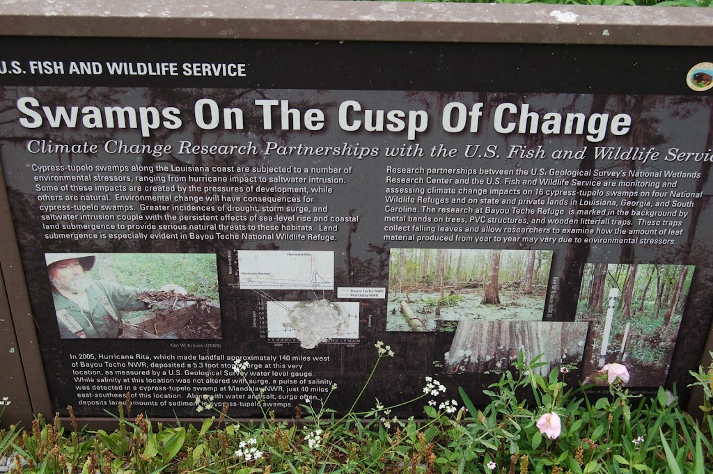 Cypress-tupelo swamps along the Louisiana coast are subjected to a number of environmental stressors, ranging from hurricane impact to saltwater intrusion. Some of these impacts are created by the ...