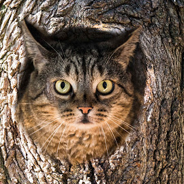 Owl cat by Paul Drajem - Animals Other ( photoshop art, cat, manipulations, tree, bark, artistic, trees, feline, owls )