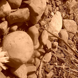 by Lenora Popa - Nature Up Close Rock & Stone ( macro, sepia, nature, nature up close, rock formation )