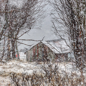Snowy day by Benny Høynes - Landscapes Weather ( winter, cold, boathouse, snow, spring, norway )