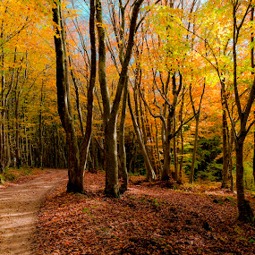 The road in the forest by Mauro Fini - Landscapes Forests ( canfaito, forest, woods )