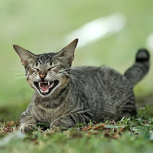 SMILING-CAT-pixoto.jpg
