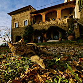 Autumn country house in Toscana by Fabrizio Reali - Animals - Cats Portraits ( cats, canon, cat, autumn, colors, house, photo, sun, country )
