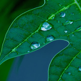 Droplets by SANGEETA MENA  - Nature Up Close Leaves & Grasses