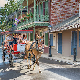 French Quarter 8 by Sheldon Anderson - People Street & Candids ( new orleans, french qtr, march, 2015, morning )
