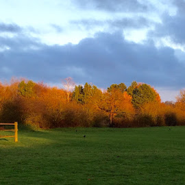 Autumn evening by Jo Thomas - Landscapes Prairies, Meadows & Fields