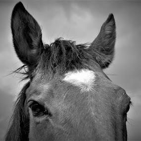 the sweetest eyes by Sara Verdini - Black & White Animals