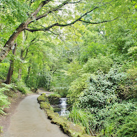 by Eloise Rawling - City,  Street & Park  Vistas ( leading lines, greens, trees, footpath )