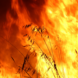 Flaming grass by Jennifer Duffany - Abstract Fire & Fireworks ( grass fire grassfire hot burning )