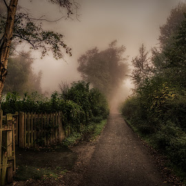 Misty Path by Adam Lang - City,  Street & Park  City Parks ( fence, fog, path, trees, mist )