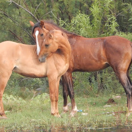 by Misty Mcnaughton - Animals Horses
