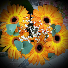 Orange and black flowers by Patrizia Emiliani - Instagram & Mobile Android ( orange, flowers, black )