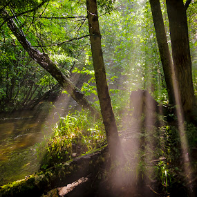 Morning Mist #1 by Christopher Burnett - Landscapes Forests ( creek, shafts of light, forest, pwcsunbeams, river )