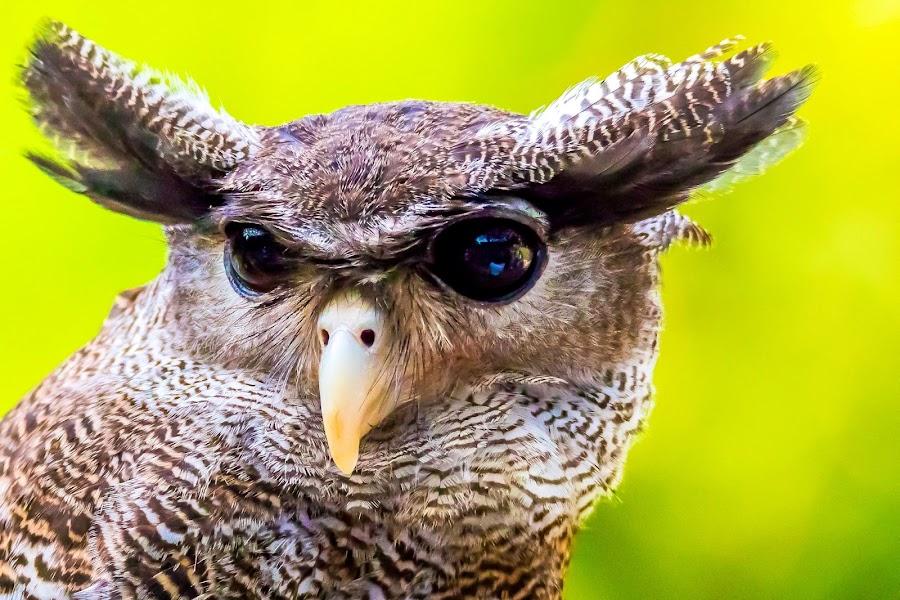 Im See You by Ken Nicol - Animals Birds (  )