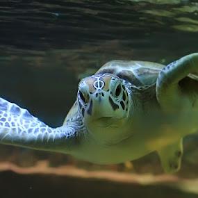 The Bulush by Rakhman Matsunaga Stavolt - Animals Sea Creatures ( water, macro, amphibian, sea, animal )