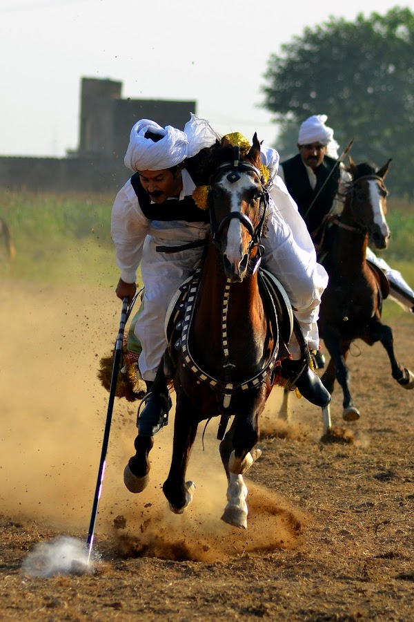 Tent Pegging by Adnan Aslam - Animals Horses