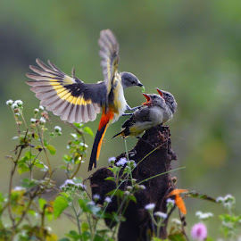 Feeding time by Yadi Setiadi - Animals Birds ( small, flowers, bush, feeding, birds, wildlife )
