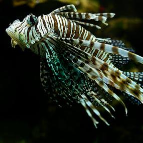 Funny Diver by Tigi Borg - Animals Fish ( pande, maksimir, jesen, �etnja, tigi, nature, color, priroda, beltanica, zagreb )