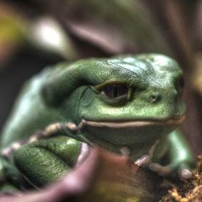 Green by Mat Hockett - Animals Amphibians