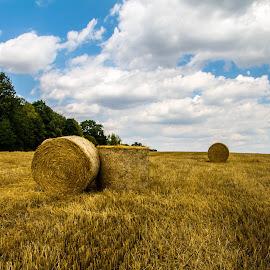 by Michal Valenta - Landscapes Prairies, Meadows & Fields