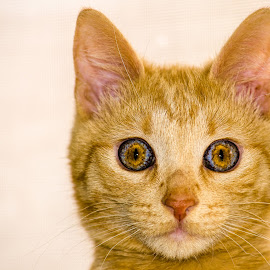 by David Hopper - Animals - Cats Portraits