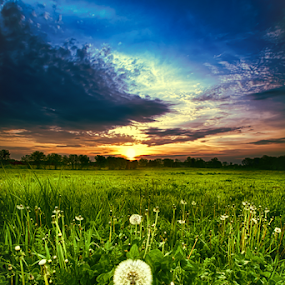 Spring time  by Sushmita Sadhukhan - Landscapes Prairies, Meadows & Fields ( grasses, field, dandelion, sunset, sun coming through wildflowers, evening )