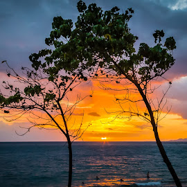Maui Sunset by Brad Larsen - Landscapes Sunsets & Sunrises ( clouds, orange, colors, sunset, trees, beach )
