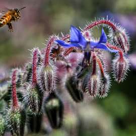 Bee  by Todd Reynolds - Animals Insects & Spiders