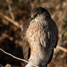 by Steven Aicinena - Animals Birds ( winter, wildlife, big bend national park, landscape )