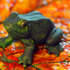 Autumnal Toad by Howard Mattix - Artistic Objects Other Objects ( macro, leafs, colorful, art objects, toads )