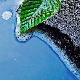 Edges by Mark Mynott - Nature Up Close Leaves & Grasses ( water, natural light, blue, green, bubbles, nature up close, rock, leaf )