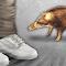 충남 대천에서 멧돼지가 2명 살해, 4명 중상입혀...